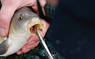 removing a fish
