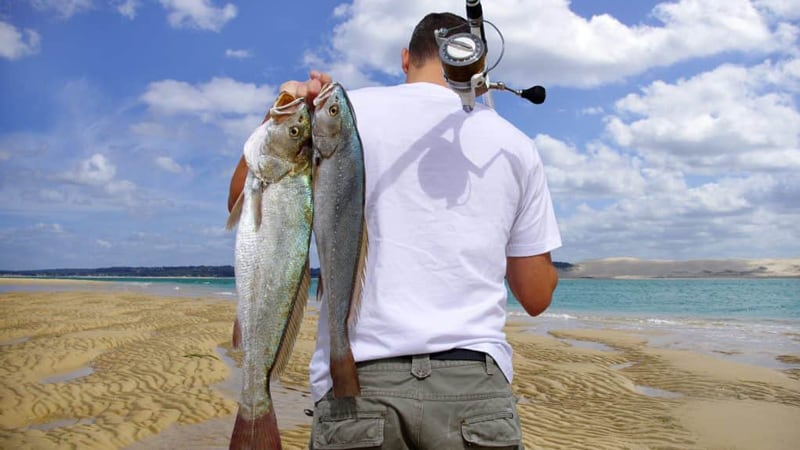 Fishing License Cost in California by category