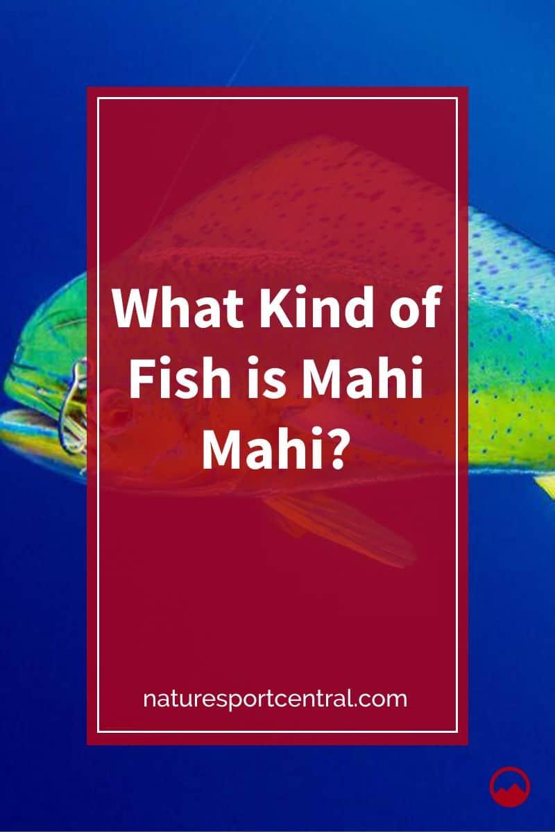 What Kind of Fish is Mahi Mahi