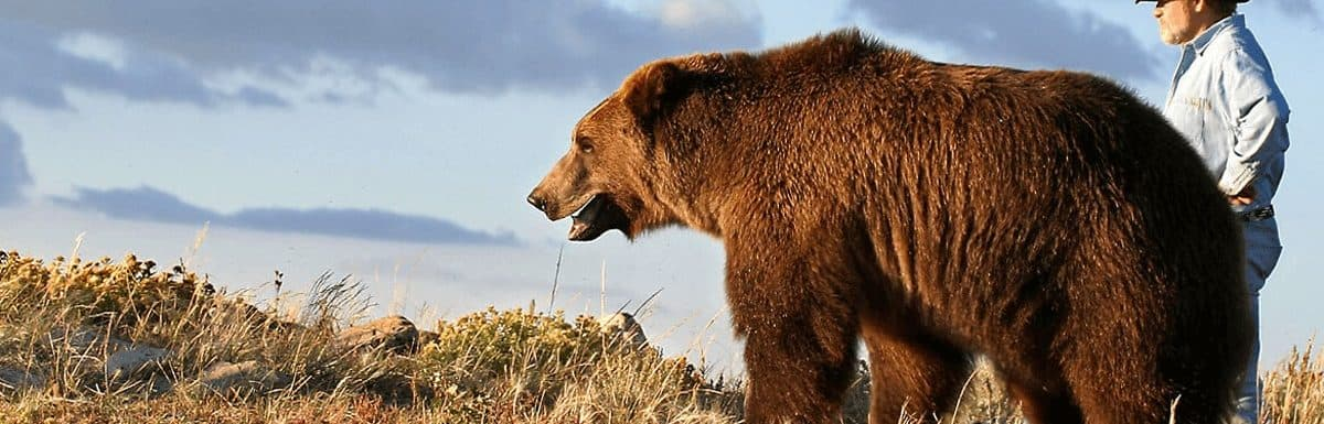 Top 7 Famous Bears