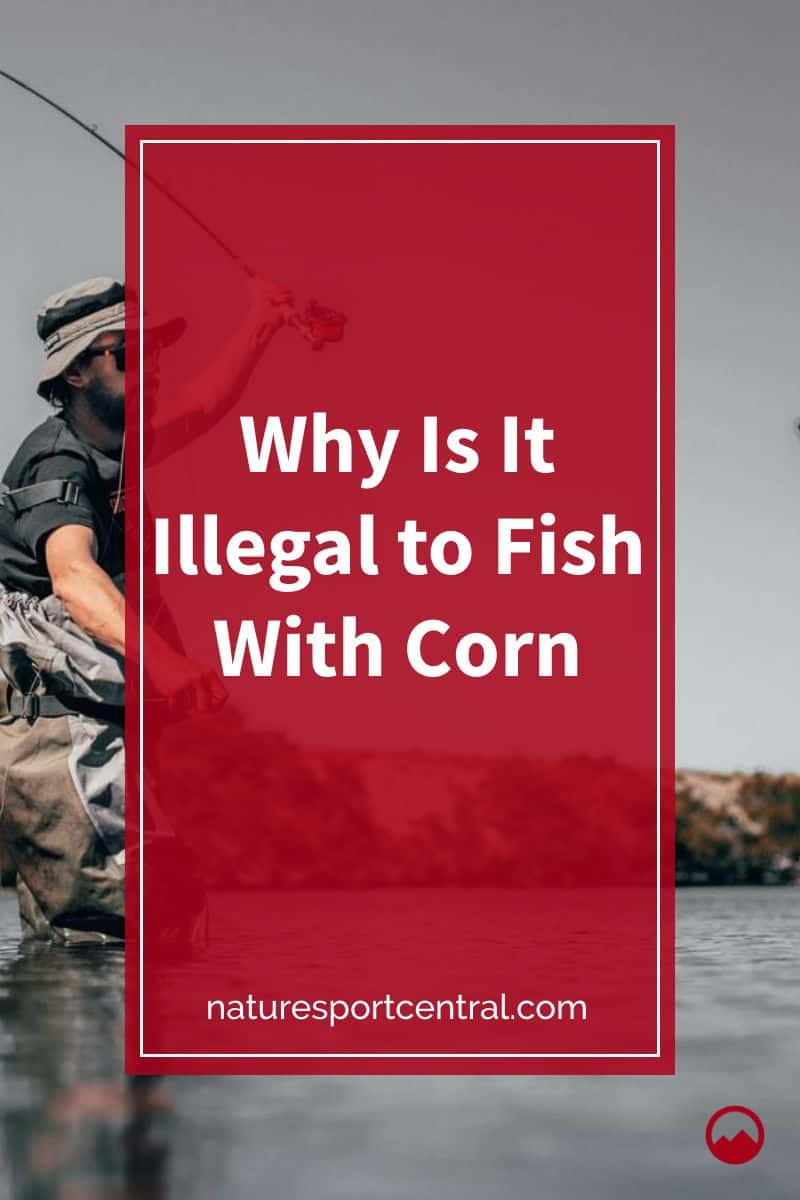 Why Is It Illegal to Fish With Corn