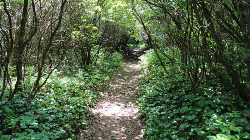 Bartram Trail