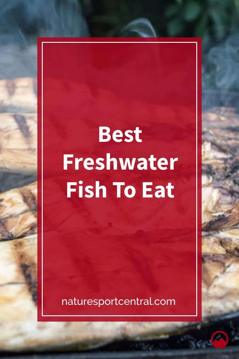 Best Freshwater Fish To Eat