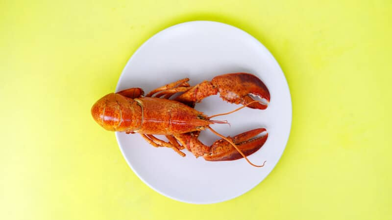 lobster in a plate