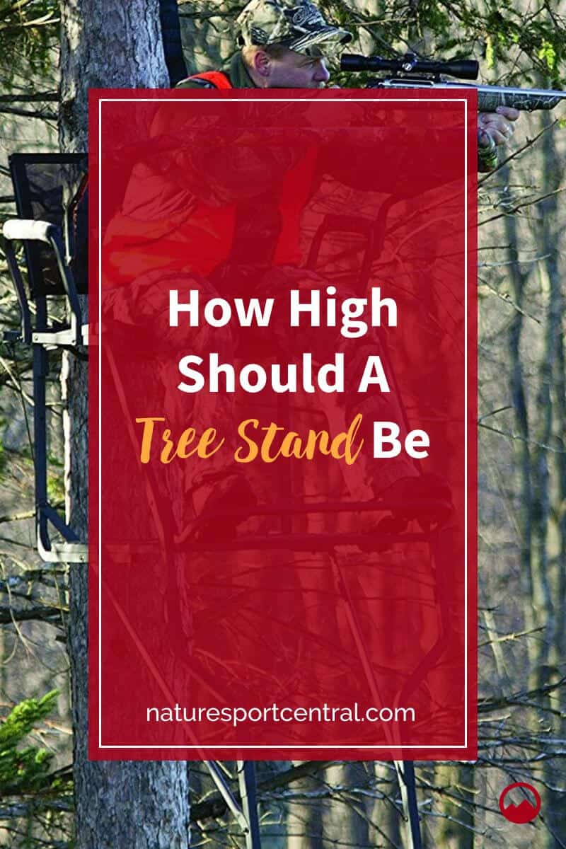 How High Should A Tree Stand Be